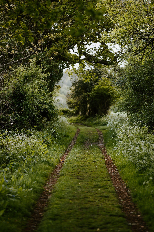 Chemin en forêt pour méditer et calmer les céphalées de tension chroniques