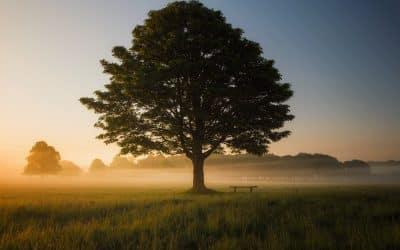 L'éveil spirituel, une composante clé de votre développement personnel