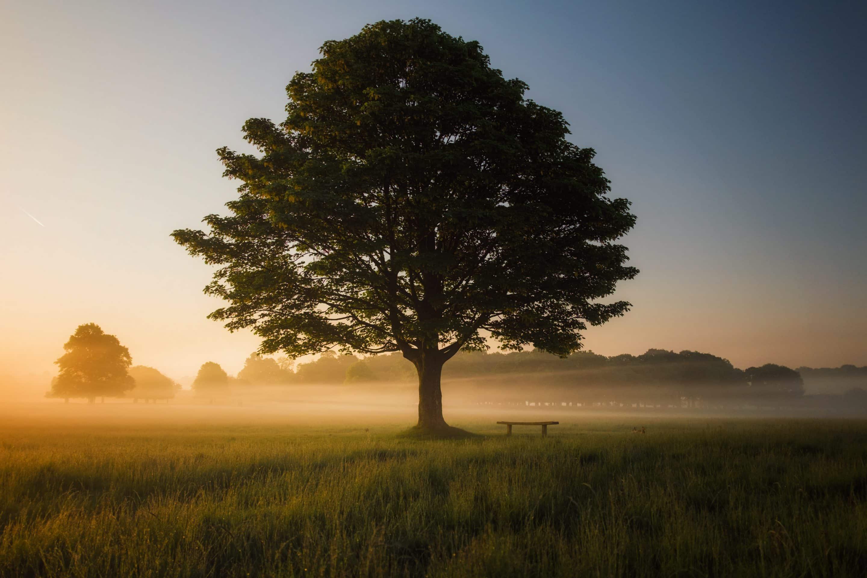 Arbre à l'aube avec un banc de méditation à son pied