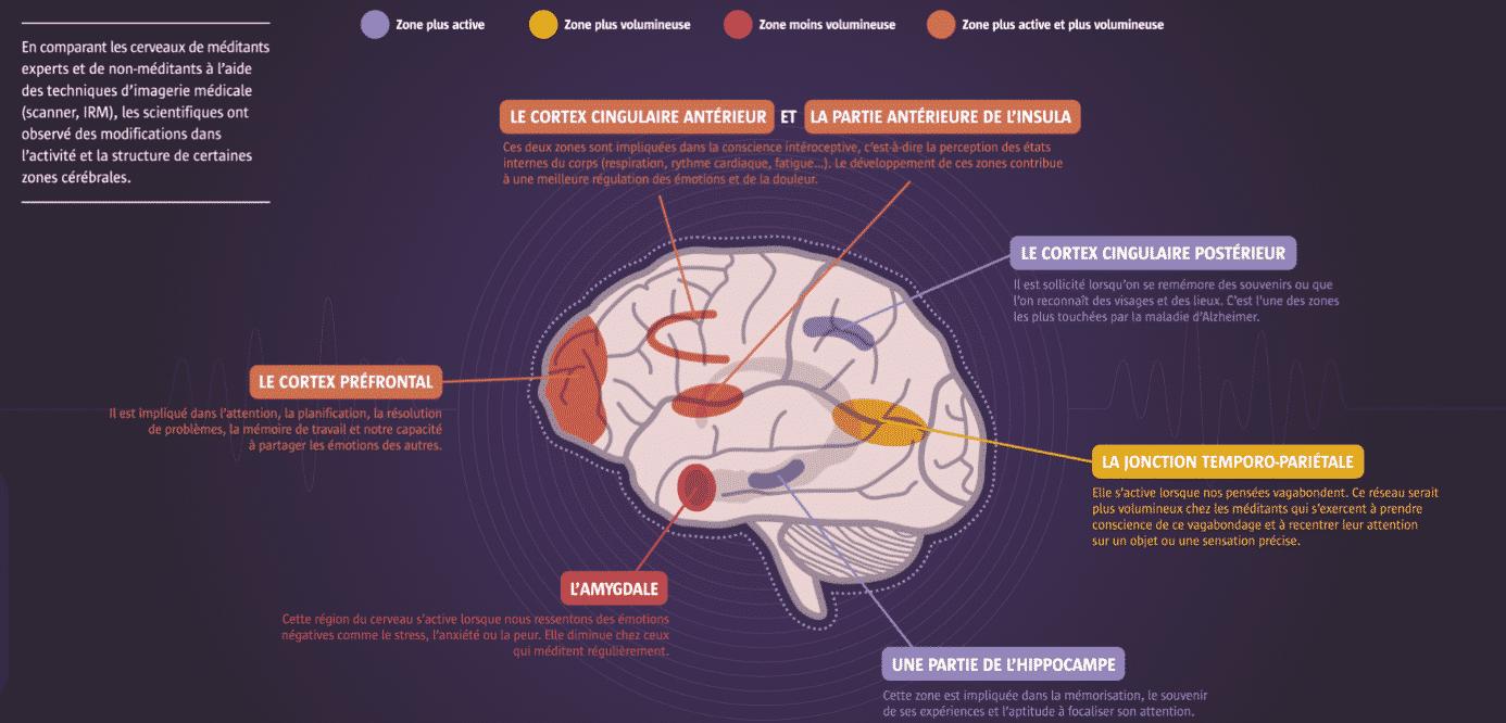 Schéma des zones du cerveau qui bénéficient d'une pratique régulière de méditation