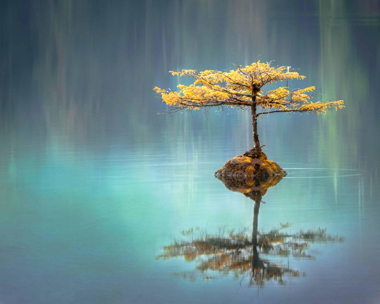 Photo d'un arbre au milieu de l'eau qui symbolise l'équilibre contrairement aux vertiges