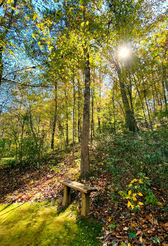 Banc dans la forêt pour méditer et réfléchir sur les douleurs chroniques